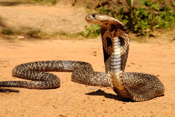 Что означает змея во сне