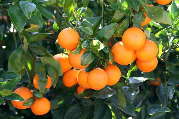 витамины содержащиеся в мандаринах