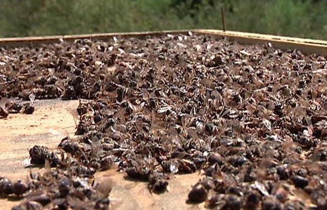 настойки пчелиных продуктов
