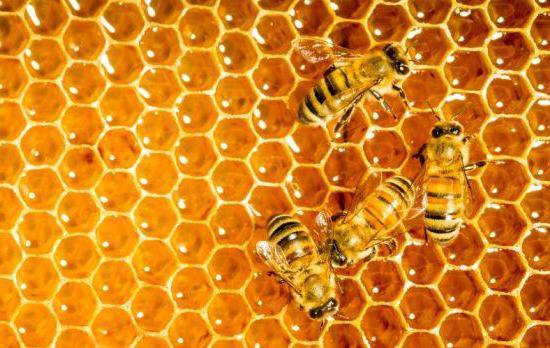 пчелиные продукты прополис