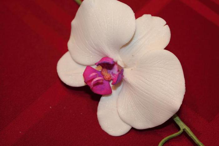 Как сделать орхидею из мастики пошагово