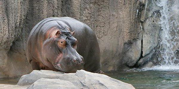 самое тупое животное в мире фото