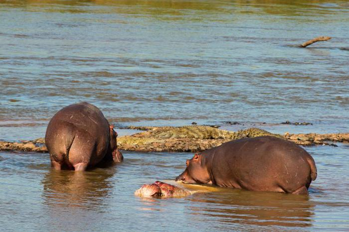 самое тупое животное в мире фото с описанием