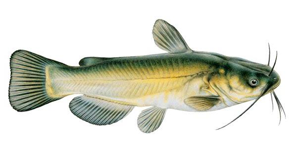 каша для рыбалки карася