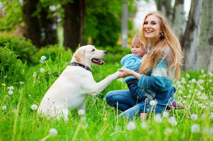 Признаки аллергии на собак у взрослых