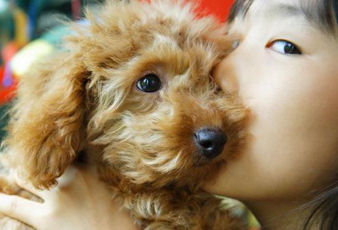 аллергия на собак симптомы у взрослых фото