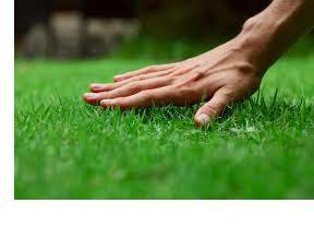 укладка газона в рулонах
