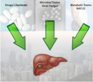Можно ли вылечить токсический гепатит