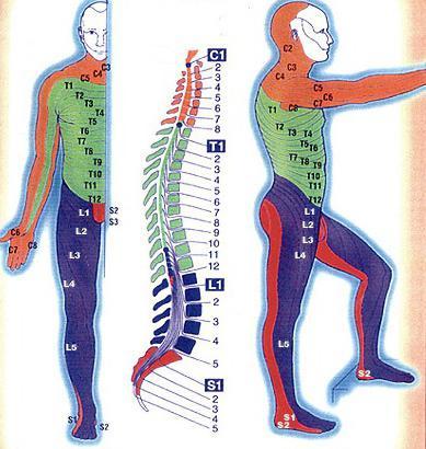 Может ли болеть спина и шея от нервов