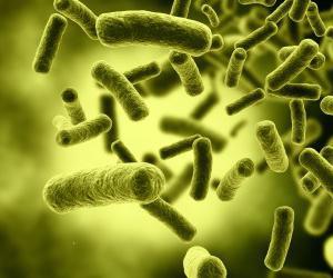 особенности бактерий