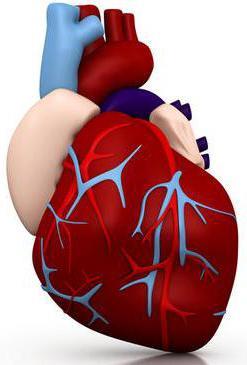 функциональная кардиопатия