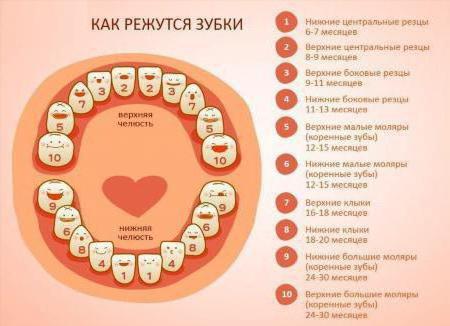 глазные зубы фото