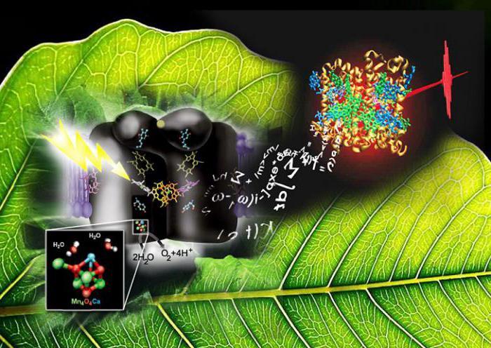 Процесс фотосинтез: кратко и понятно и для детей ...: http://fb.ru/article/252388/protsess-fotosintez-kratko-i-ponyatno-i-dlya-detey-fotosintez-svetovaya-i-temnovaya-fazyi