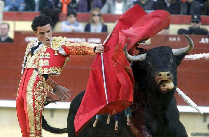 почему быки не любят красный цвет
