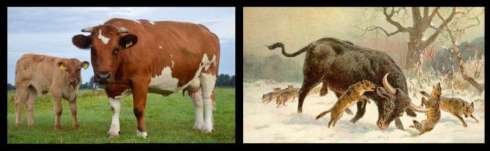 каких животныходомашнил человек