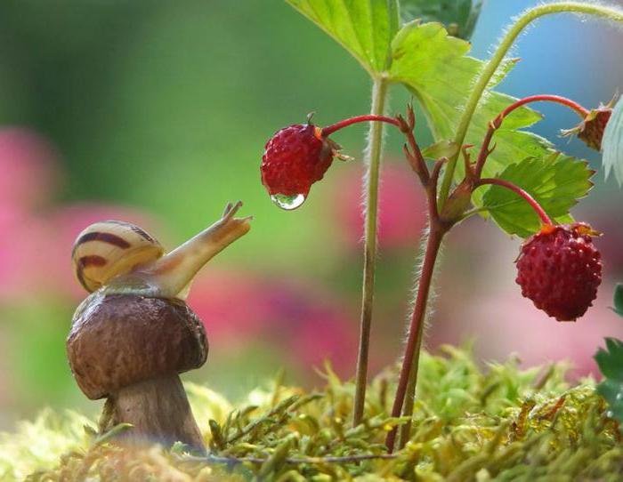for Caracoles de jardin que comen