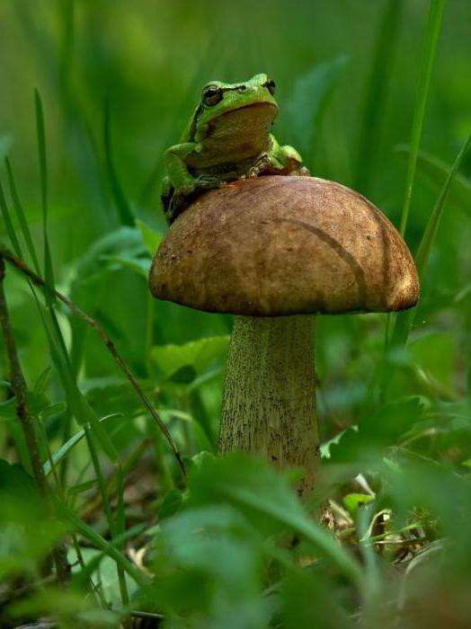 Что такое микология? Микология - наука о грибах