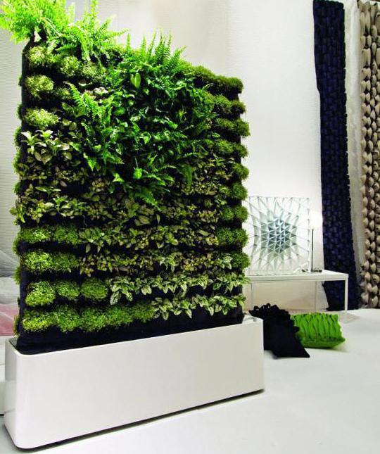 вертикальное озеленение в квартире фото