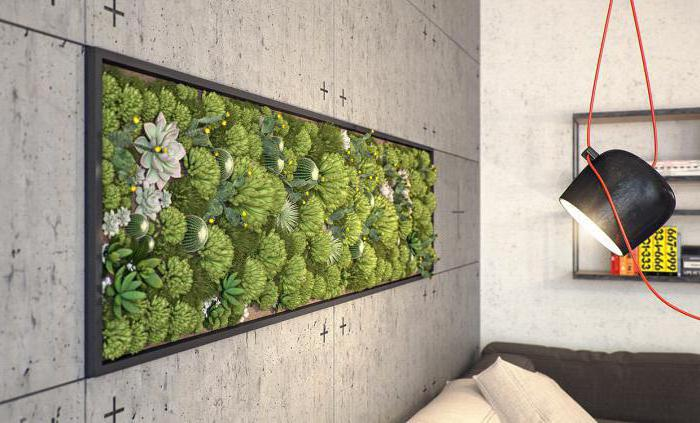 вертикальное озеленение в квартире своими руками