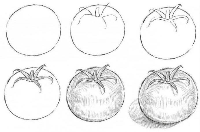 как нарисовать помидор карандашом поэтапно