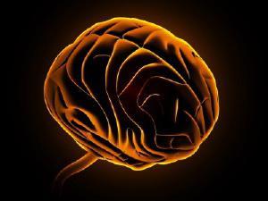 нервная система человека фото
