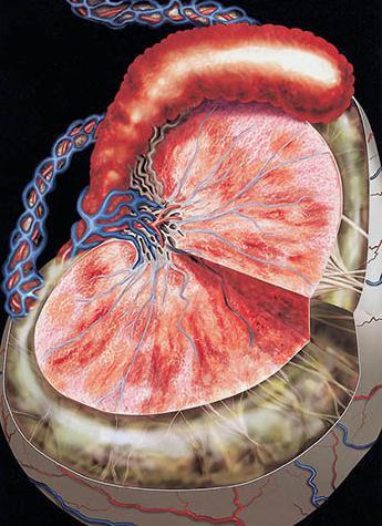 орхит симптомы и лечение