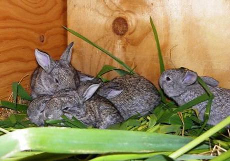 какого размера должен быть маточник для кроликов