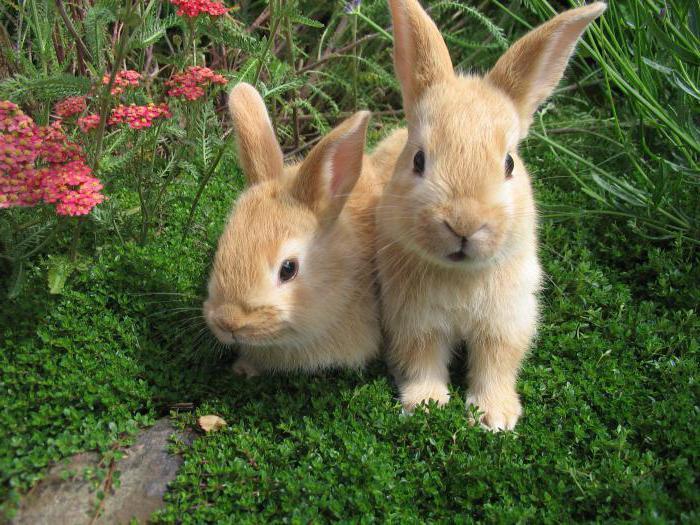 какие размеры маточника для кроликов