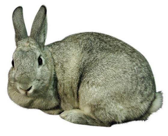 размеры маточника для кролика