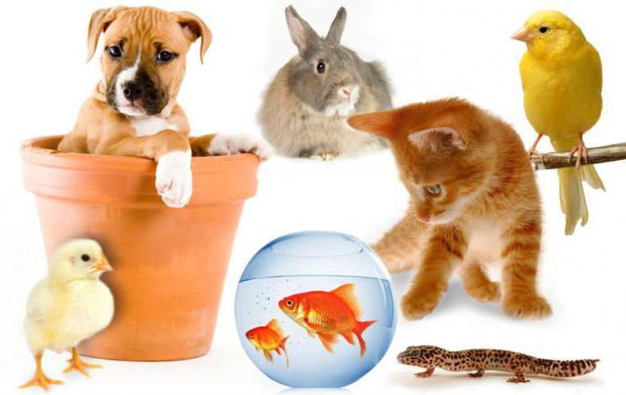 детские загадки про домашних животных