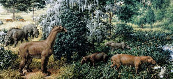 кайнозойская эра животные и растения фото расскажите, что