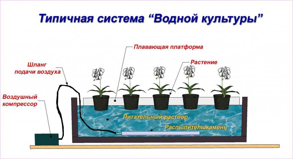 hydroponic installation