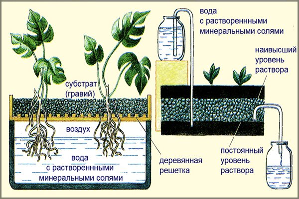 hydroponic solution