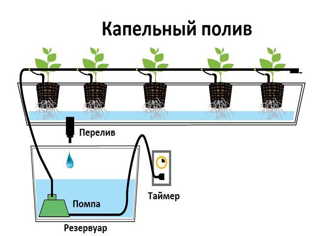 hydroponic plant diagrams