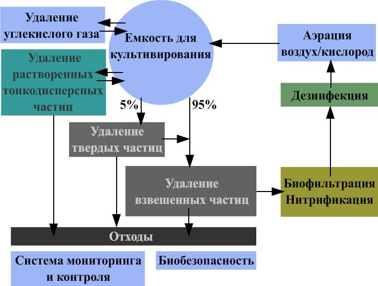 Разведение осетров в УЗВ: оборудование, рацион питания, технология выращивания, продуктивность и советы специалистов по разведению