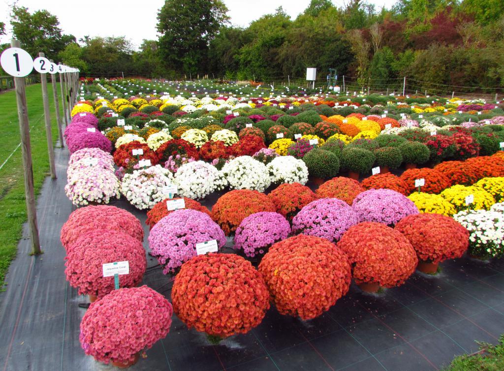 101, купить цветы садовые в украине