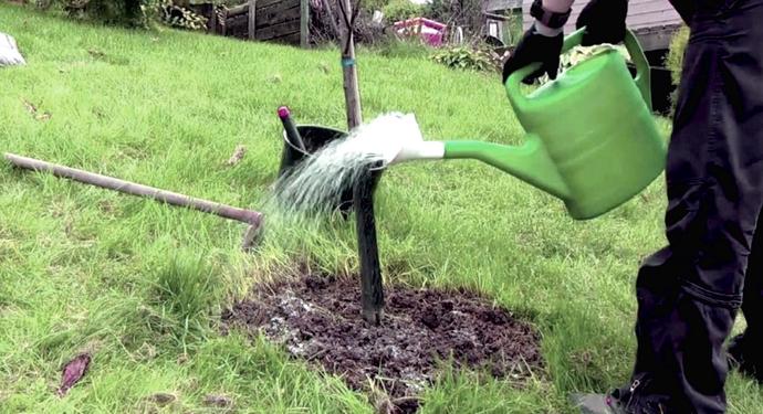 Яблоня Пинова: описание с фото, вкусовые качества, уход и отзывы садоводов