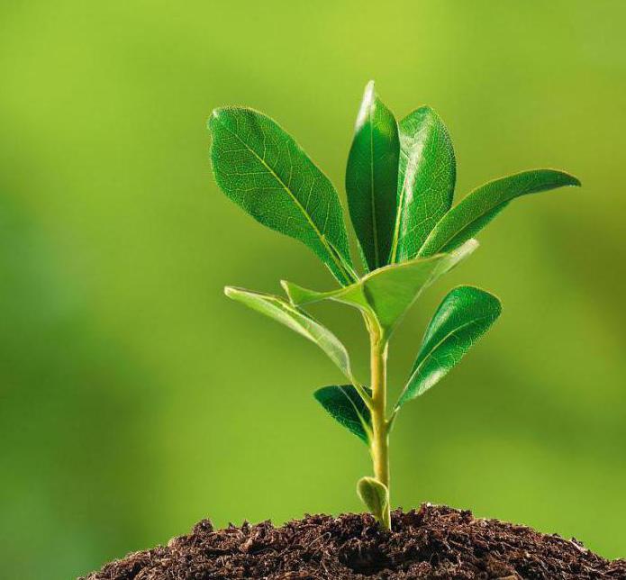 комитет по экологии и природопользованию