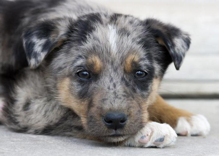 приют для собак в москве отдать собаку