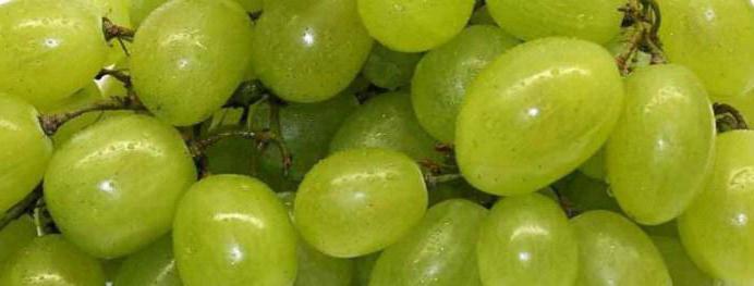 описание винограда столетие