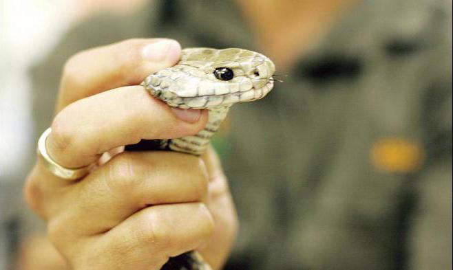 К чему снится секс машина и змея