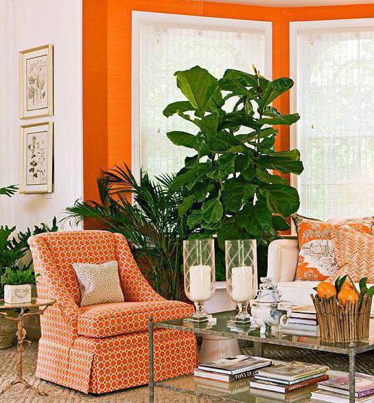 Warna Mana Yang Dikombinasikan Dengan Oranye