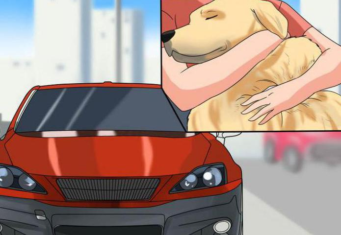 Плохие приметы для водителей секс в машине