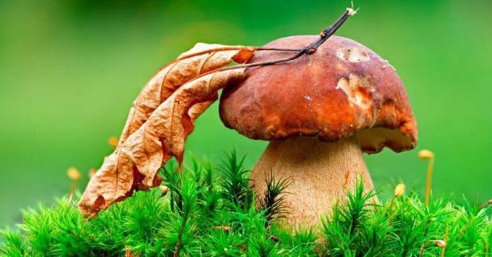 Правда ли, что много грибов - примета плохая (к войне)? Народные приметы о грибах