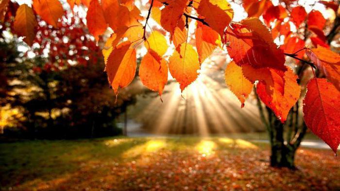 факты про осень