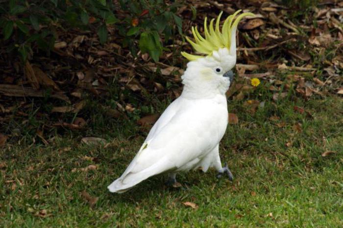исчезающий вид попугаев