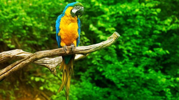 сколько видов попугаев существует