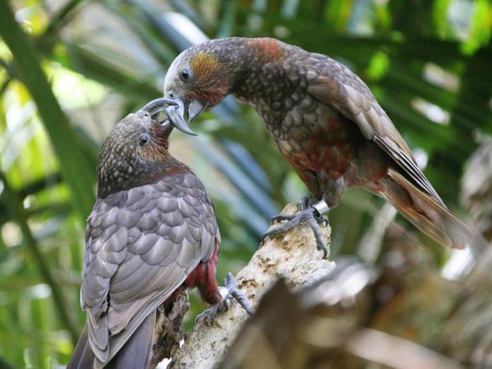 вид попугая