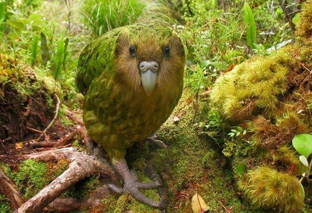 виды попугаев фото и названия