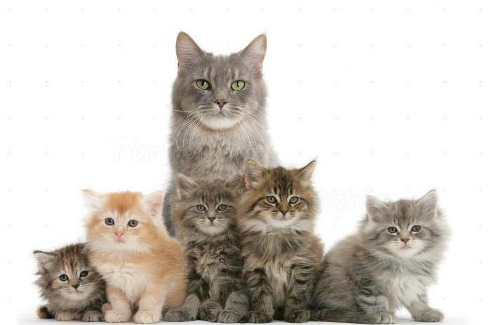 Гепатовет суспензия для кошек, 35 мл, инструкция по применению.